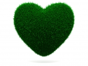 davanti counselling green grass heart